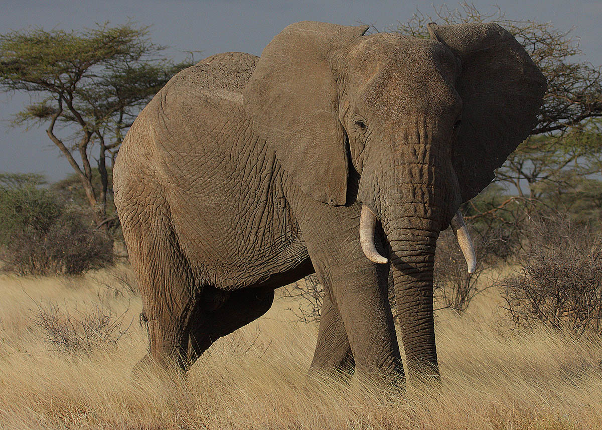 learn about elephants u2013 enjoy these free learning resources